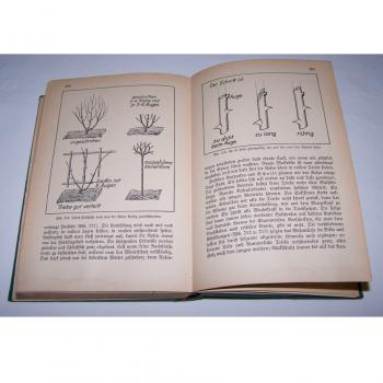 Literatur - Sachbücher - Wenn Du einen Garten hast - Rosenschnitt